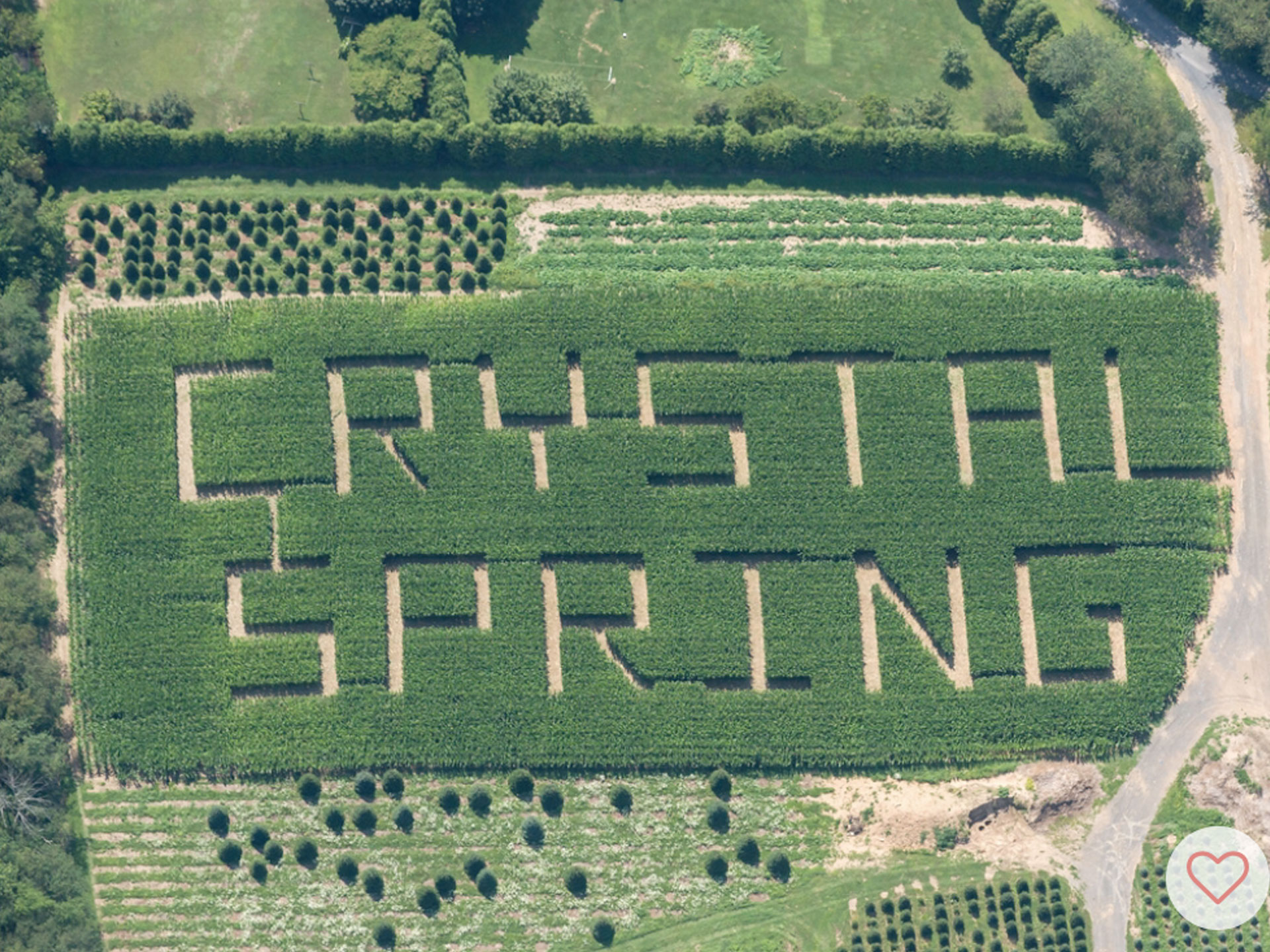 Crystal Spring Tree Farm Corn Maze