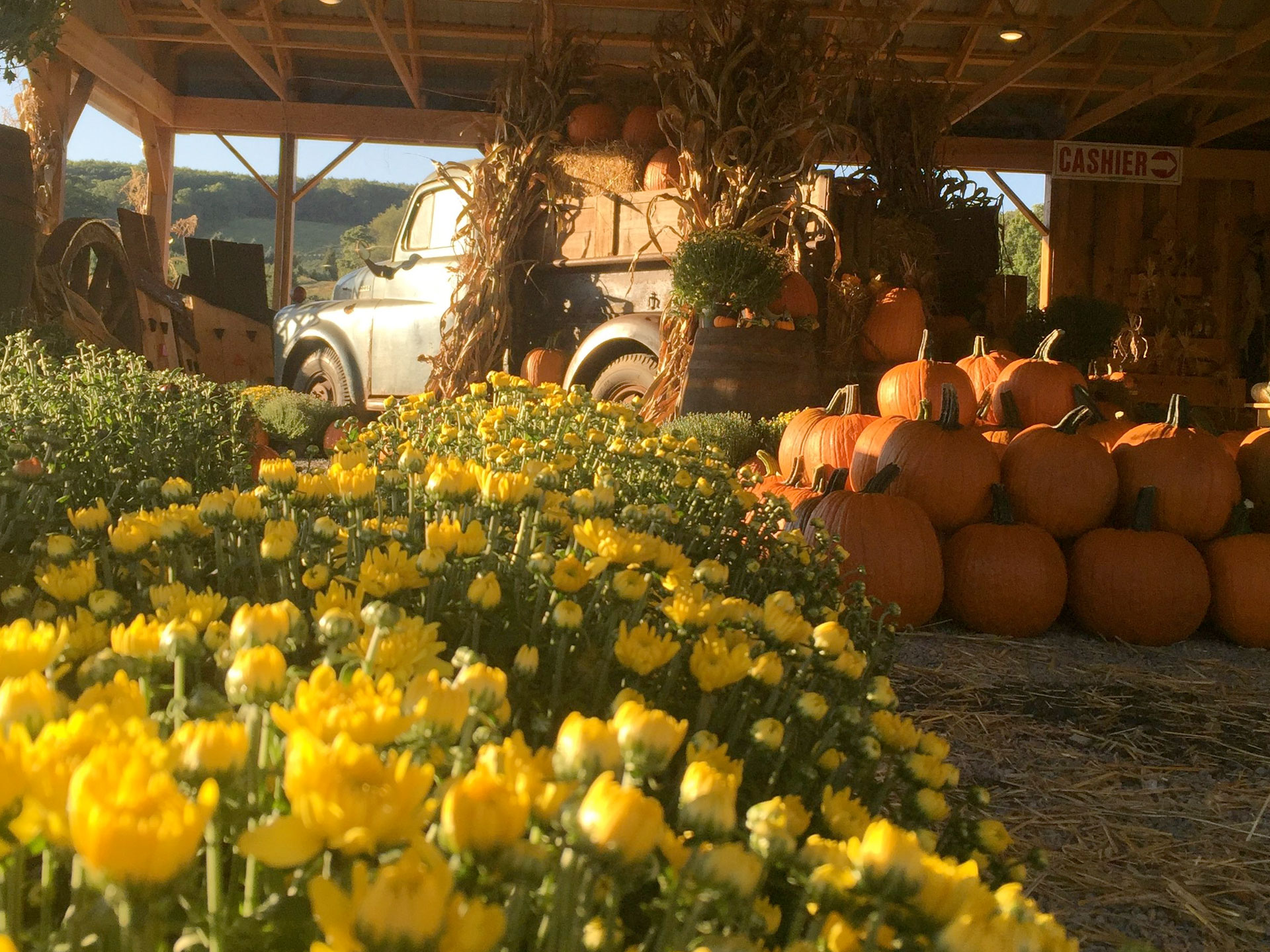 pumpkins, mums & an old truck decorated