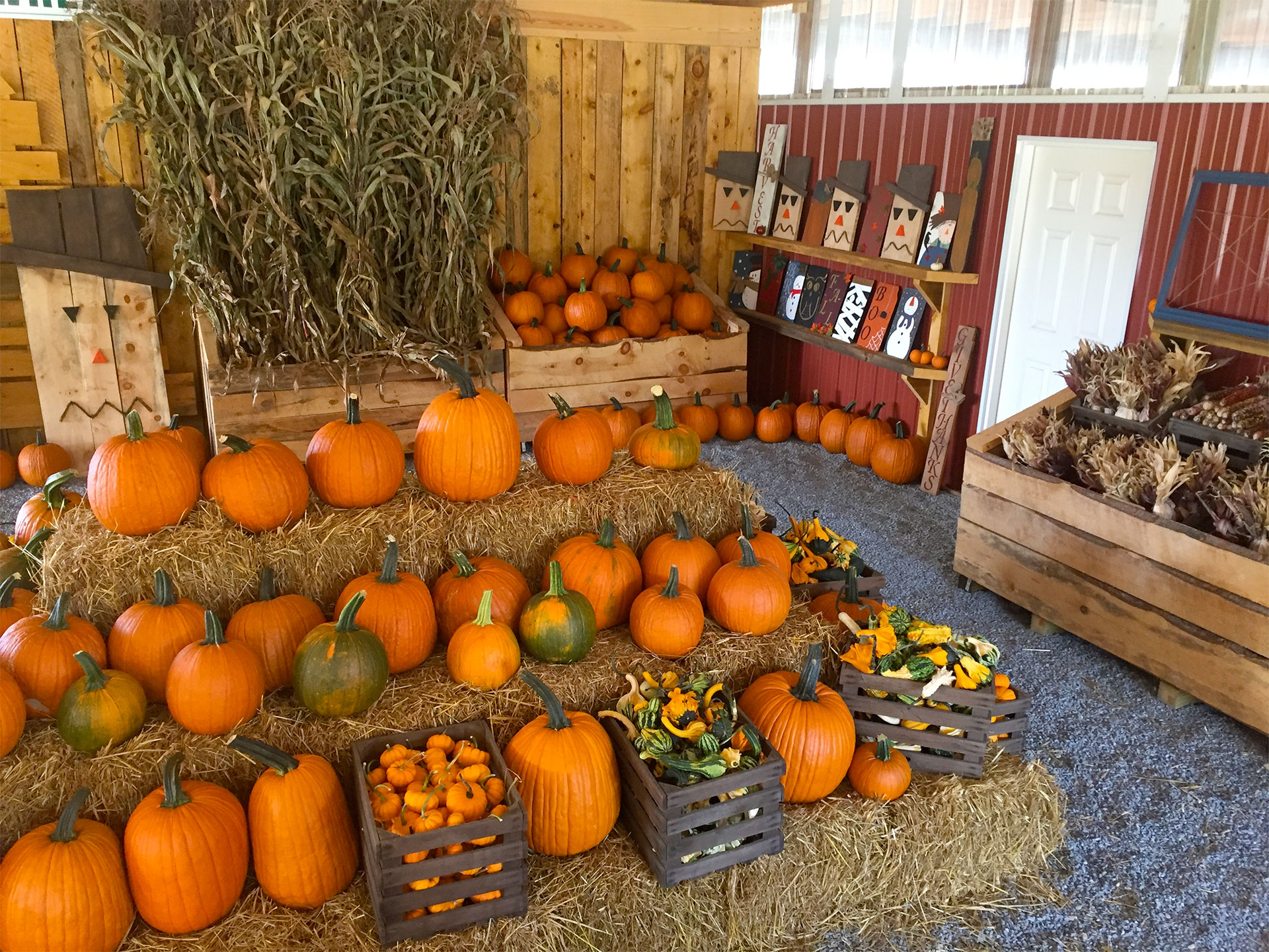 Pumpkins on a haybales